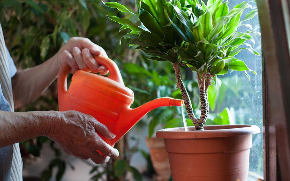 Ζεστός ήλιος και προφύλαξη φυτών
